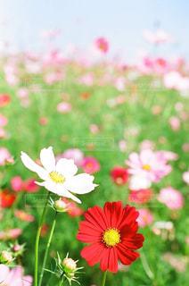 近くの花のアップ - No.876022