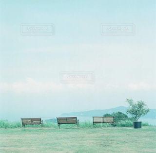 背景の木と大規模なグリーン フィールド - No.876024