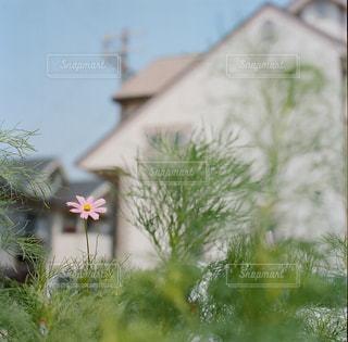 近くの花のアップの写真・画像素材[876027]