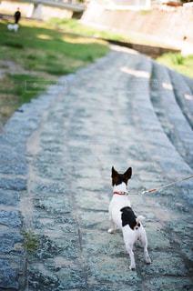 歩道の上を歩く猫 - No.878289
