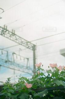 近くの花のアップ - No.892253