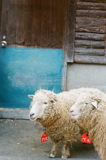 建物の上に羊の立っている数 - No.892254