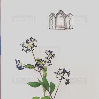紫の写真・画像素材[1456239]