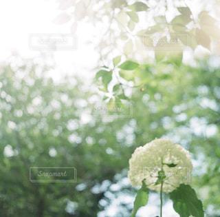 近くの花のアップの写真・画像素材[1843873]