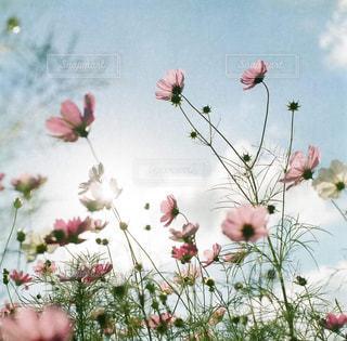 近くの花のアップの写真・画像素材[1885547]
