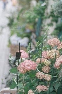植物の上のピンクの花の写真・画像素材[3346838]