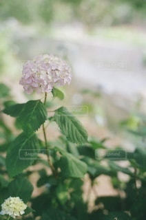 植物の上の白い花の写真・画像素材[3346839]