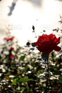 近くの花のアップ - No.867652