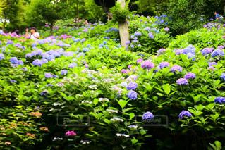 近くのフラワー ガーデンの写真・画像素材[868296]