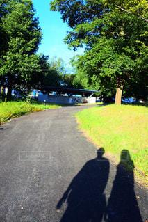 ツリー横の通りを歩く人々 のグループの写真・画像素材[868302]