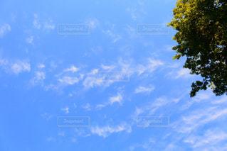 近くの青い曇り空の写真・画像素材[868305]