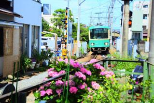 江ノ電と紫陽花の写真・画像素材[868318]
