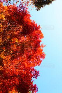 近くの木のアップの写真・画像素材[868334]
