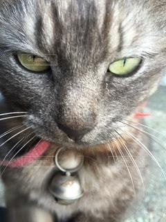 猫の写真・画像素材[27095]