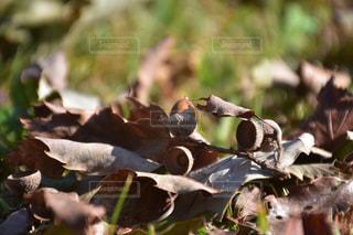 近くに鳥のアップの写真・画像素材[868419]