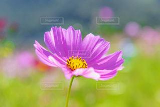 近くの花のアップの写真・画像素材[1741720]