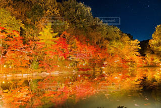 木々 に囲まれた湖の写真・画像素材[1741723]