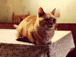 寝起き猫の写真・画像素材[868643]