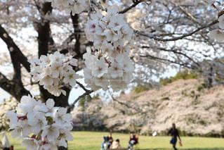 花の野原を見ている人々のグループの写真・画像素材[2102335]