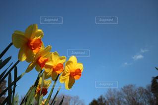 黄色い花の写真・画像素材[2105446]