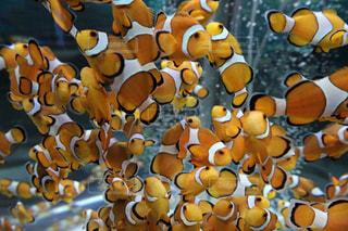 壁に掛かっている魚の写真・画像素材[2119213]