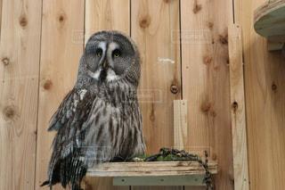 木の扉の上に座る鳥の写真・画像素材[2119221]