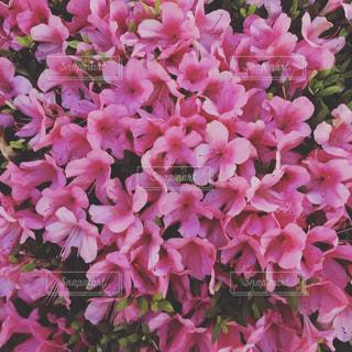 近くの植物にピンクの花のアップの写真・画像素材[868726]