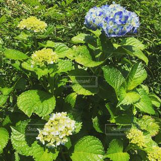 庭園の緑の植物の写真・画像素材[868727]