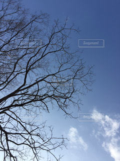 木を...の写真・画像素材[868833]