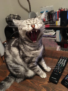 リモート コントロールをもつ猫の写真・画像素材[870302]