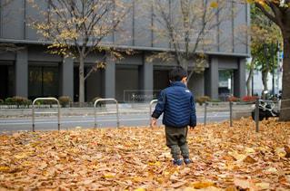 落ち葉の絨毯の写真・画像素材[868930]