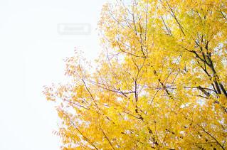 街の紅葉と空の写真・画像素材[868931]