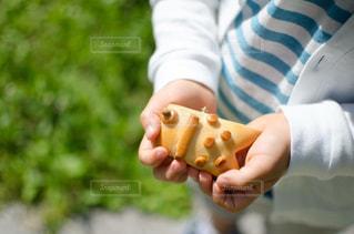 鯉のぼりパンの写真・画像素材[1131335]