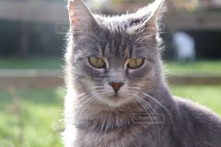 近くに猫のアップの写真・画像素材[869707]