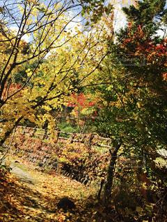 秋の写真・画像素材[869382]