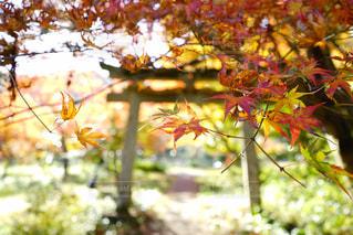 木の枝に花の花瓶の写真・画像素材[869464]