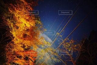 紅葉と星空の写真・画像素材[869559]