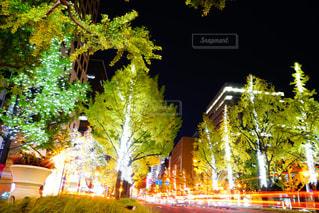 近くの木のアップの写真・画像素材[870215]