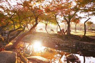 近くの木のアップの写真・画像素材[872470]