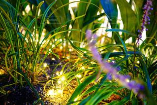 近くの植物のアップの写真・画像素材[873599]