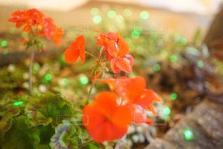 花のアップの写真・画像素材[915896]