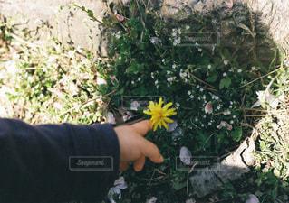花と影の写真・画像素材[871273]