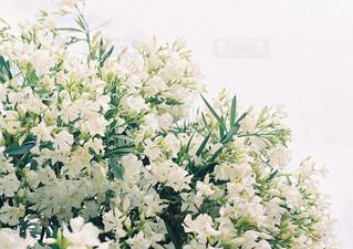 白い花 - No.871317