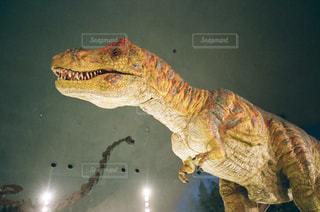 その口を開いて恐竜の写真・画像素材[1282984]