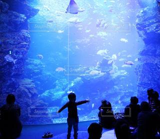 楽しい水族館の写真・画像素材[869675]