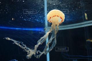 クラゲの写真・画像素材[869722]