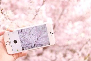 携帯電話を持つ手の写真・画像素材[869740]