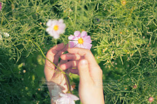 花を持っている手の写真・画像素材[869755]