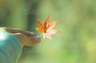 近くの花のアップの写真・画像素材[870879]