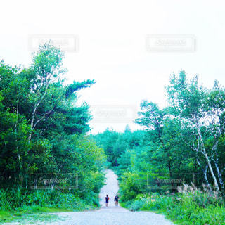 豊かな緑と歩く男たち - No.869894